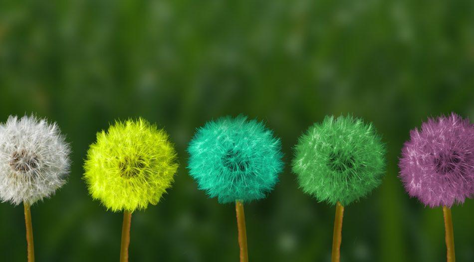 Imatge flors colors